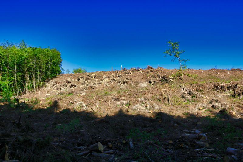 Bergischer Panoramasteig Etappe 8
